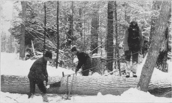Fig. 6. Sawing Logs into Lengths.