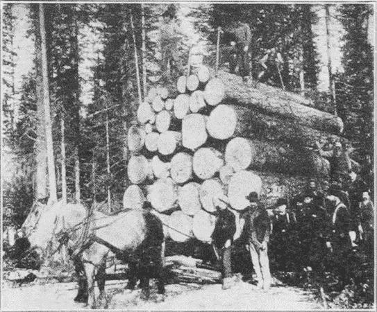 Fig. 13. A Load of Logs. Flathead County, Montana.