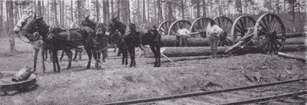 Fig. 24. Hauling Logs by Mules. Oscilla, Georgia.