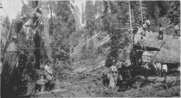 Fig. 26. Hauling Big Logs by Donkey Engine.