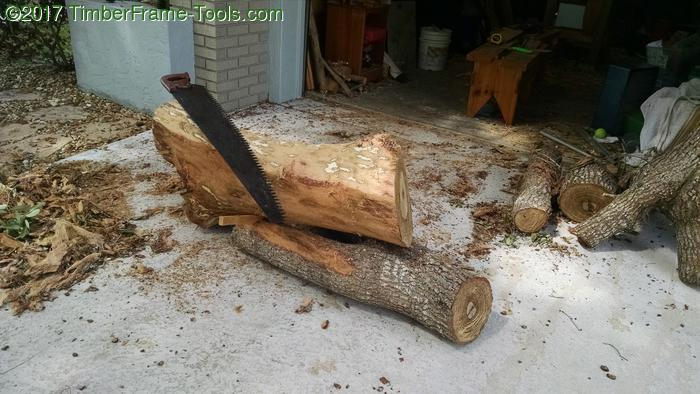 Ready to rip saw the log